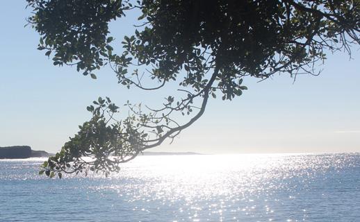 sunlight on ocean viewed from boneyard beach, protected microclimate